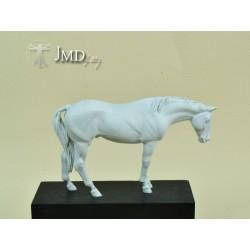 "Ac04 Horse ""straight head"""